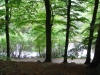 A view through the Beech Trees